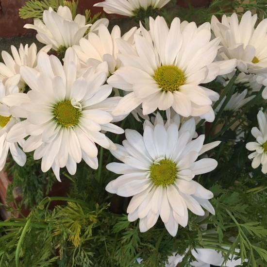 Easy daisy arrangment